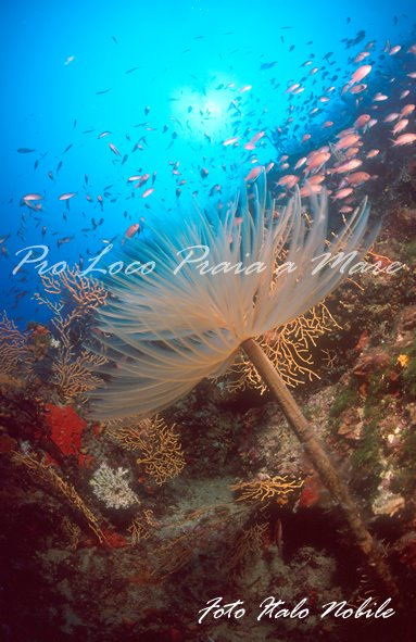 Archaeological Fieldwork Opportunities Bulletin - Underwater